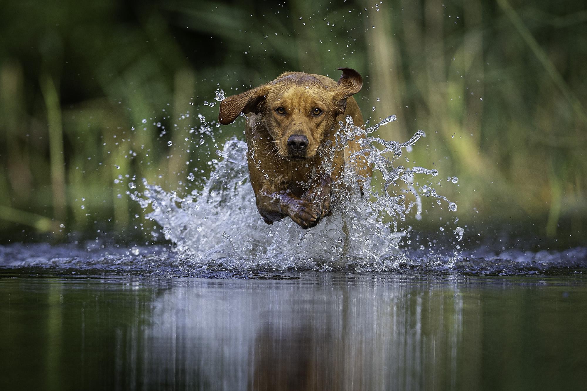 Marcus Jacobs Photographer
